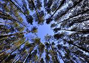 Un complexe sportif sera chauffé par un système fonctionnant grâce à la biomasse forestière résiduelle dans le Nord du Québec
